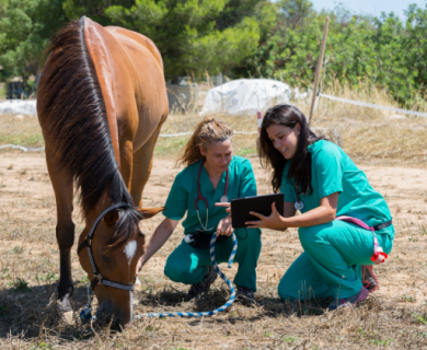 Medical professionals examining a horse
