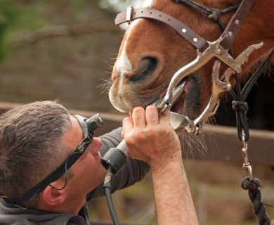Medical professional examining a horse